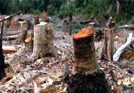 فرجی شهردار نیر :قوانین منع قطع اشجار در منطقه بولاغلار نیازمند حمایت مسئولان می باشد.