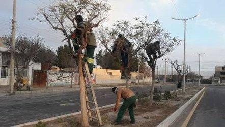 عملیات هرس زمستانه درختان معابر و خیابانهای سطح شهر آغاز شد