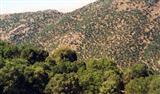 کشت زیر اشکوب، پایداری جنگلهای زاگرس را به خطر میاندازد