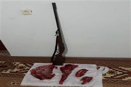 شکارچی متخلف شوکا در علیآباد کتول شناسایی شد