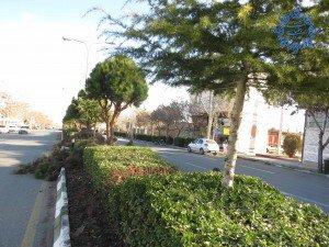 هرس و فرم دهی پرچین درختان معابر سطح شهر