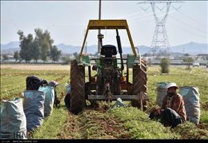 بیمه محصولات کشاورزی خوزستان به ۳۴۹هزار هکتار رسید