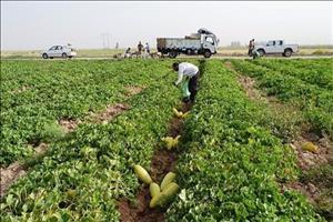 ۶۲تعاونی برای ساماندهی طرح ۵۵۰ هکتاری خوزستان تشکیل شد
