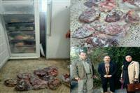 کشف لاشه یک راس مرال و کل وحشی  در نوشهر