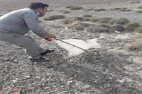 رها سازی یک حلقه مار، تحویلی توسط دوستداران حیات وحش به اداره حفاظت محیط زیست شهرستان منوجان