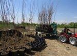 تولید و تکثیر درختان غیر مثمر با کیفیت جهت فروش و ارسال به صورت عمده به نهالکاران