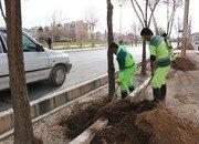 اجرای عملیات چالکود برای درختان سطح شهر شاهین شهر