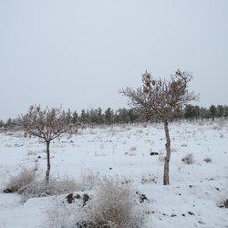 گزارش تصویری از بارش برف و یک روز زمستانی جغتای