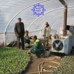 گزارش مختصری از گلخانه های شهرداری