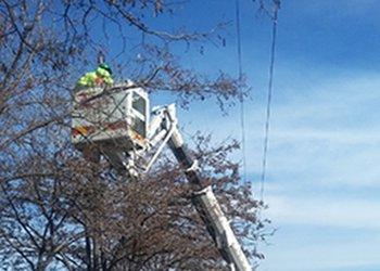 طرح هرس درختان در ۳۲ معبر و بوستان شهر در حال اجرا است