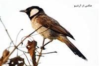 عدد پرندگان شناسایی شده در چهارمحال و بختیاری به ۲۵۵ رسید