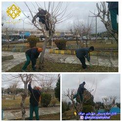 اصلاح و شکل دهی درختان میدان معلم