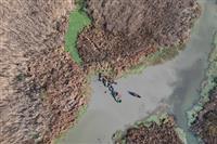 پاکسازی مناطق آلوده به گیاه سنبل آبی در تالاب انزلی.