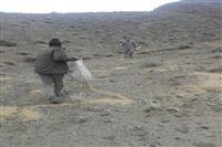 تهیه وتوزیع خوراک پرندگان وحشی توسط اداره حفاظت محیط زیست شهرستان رفسنجان