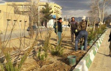 کاشت نهال درخت و درختچه در سطح شهر