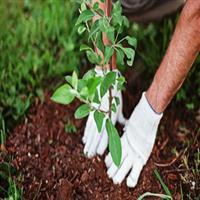"""شهر با شعار """"هر نهال، یک امید"""" به استقبال هفته درختکاری میرود/ ثبت نام توزیع نهال از فردا"""