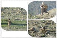  دستگیری متخلفان شکار دو بز کوهی توسط ماموران یگان حفاظت محیط زیست لامرد در فارس