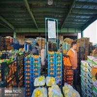 توزیع میوه نوروزی در ۳۵ نقطه شهر/ بازار گل و گیاه بازگشایی میشود