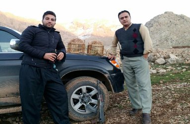دستگیری شکارچی کبک در روانسر