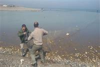 مصب رودخانه پلرود شهرستان رودسر از دام پاکسازی شد