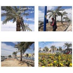 کاشت درختان نخل در بلوار علامه شیخ شوشتری در شهر شوشتر