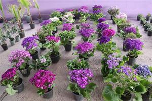 برپایی نمایشگاه عرضه گل و گیاه در آستانه فرا رسیدن سال نو