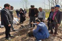 کاشتن نهال؛ به پاس مقام شهدا در استانه اشرفیه
