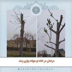 درختان در خانه نو جوانه بهاری زدند