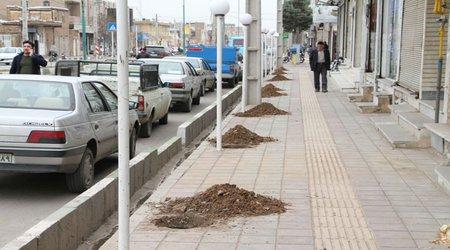 توسعه فضای سبز شهر تاکستان با سرعت و جدیت پیگیری میشود