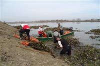 جمع آوری سنبل آبی در آببندان روستای دوله ملال ماسال