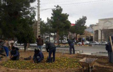 کاشت گل درمحل مثلثی ابتدای خیابان شهید فلاحی