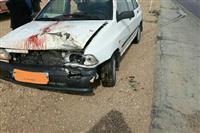 تلف شدن یک راس آهو بر اثر تصادف جاده ای در محور یزد-کرمان
