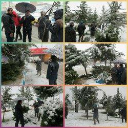 همزمان با بارش برف سنگین، برف تکانی از روی شاخه های درختان انجام شد