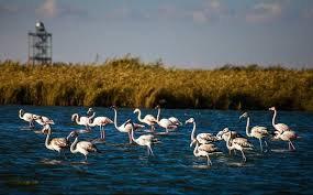 حجم آب تالاب میقان به بیش از ۲۰ میلیون متر مکعب رسیده است