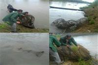 جمع آوری تورهای غیرمجاز ماهیگیری از رودخانه های چهار شهرمازندران