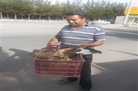 تحویل عقاب زخمی توسط دوستداران حیات وحش به اداره حفاظت محیط زیست شهرستان کرمان