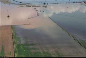 ۳۱۵ هکتار از مزارع شرکت نیشکر هفت تپه دچار آبگرفتگی شدند