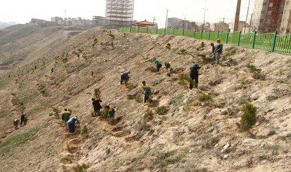 توسعه فضای سبز تبریز در ورودی شرق تبریز