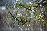 سال آبی جاری پربارشترین سال نیم قرن اخیر کشور/ یکهزار میلیمتر اختلاف بارش بین غرب و شرق کشور