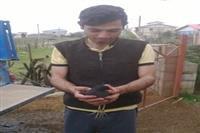 بازگشت یک قطعه پرنده چنگر نوک سرخ به طبیعت شهرستان رضوانشهر