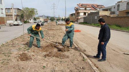 کاشت حدود ۲۰۰ اصله انواع نهال در خیابان مدرس و بلوار هلال احمر