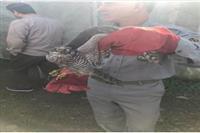 تحویل ۱۱ پرنده وحشی برای تیمار به اداره حفاظت محیط زیست صومعه سرا