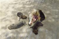 شکار ماده گرگ مادر توسط شکار چی بی رحم در شهرستان جیرفت