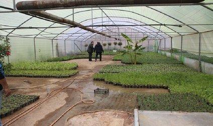 تولید ۲۵ هزار گل در گلخانه شهرداری منطقه ۶ تبریز
