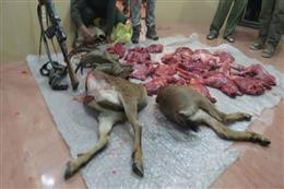 کشف لاشه سه راس کل و بز وحشی در درگیری شکارچیان غیرمجاز با محیط بانان