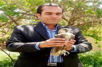 تحویل یک بهله شاهین به اداره حفاظت محیط زیست شهرستان سیرجان