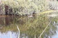 رها سازی گونه ای کمیاب و در خطر انقراض در تالاب امیرکلایه