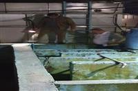 بازدید شبانه از کشتارگاه مرغ کیسم در آستانه اشرفیه