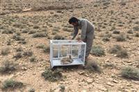 رها سازی بچه روباه در زیستگاه اصلی خود توسط یگان حفاظت محیط زیست شهرستان کرمان