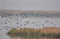 ۲۶۱ گونه پرنده در چهارمحال و بختیاری شناسایی شده است